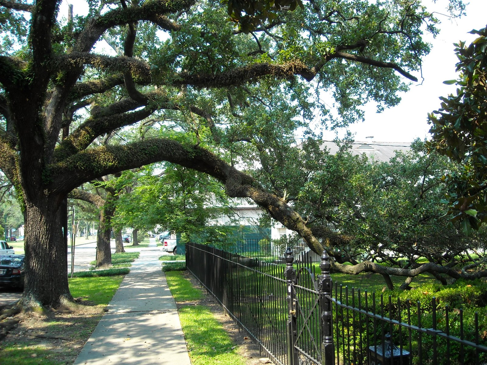 Carrollton Oak Arch