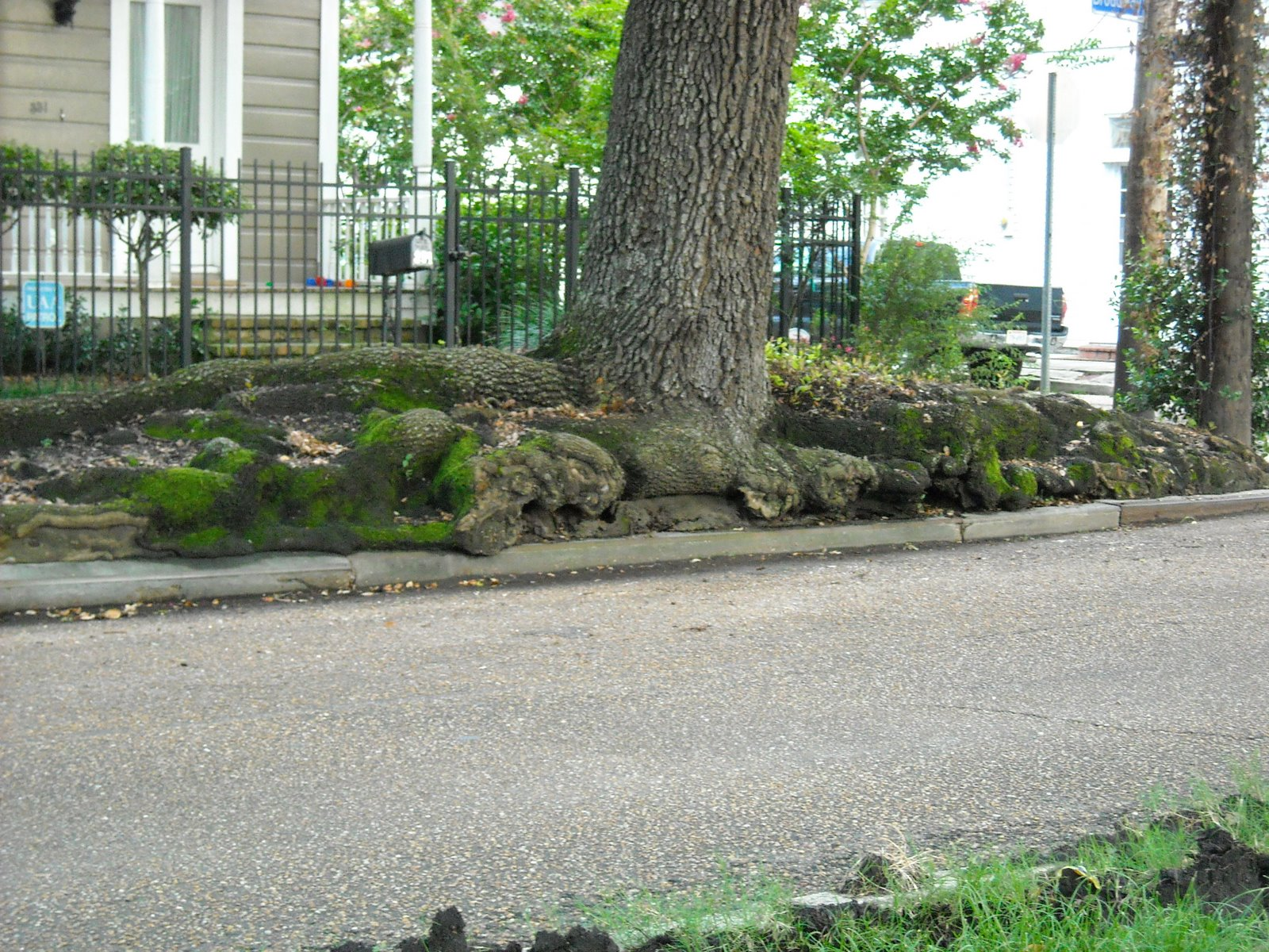 Sidewalk Roots