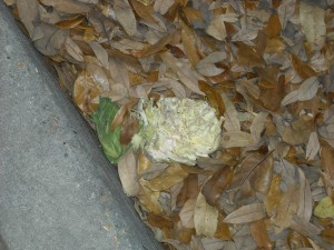 2010-03-17-thrown-cabbage (2)